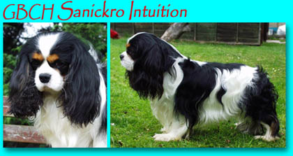 Sanickro Intuition